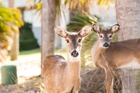 Solving Problems with Deer
