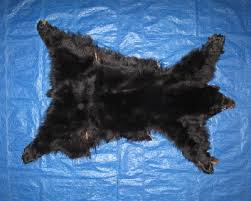 picture of this lot tanned complete black bear hides furs pelts skins