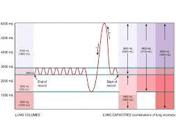 Lung Capacity Chart Purposegames
