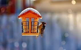 birdhouse bird winter snow nature ...
