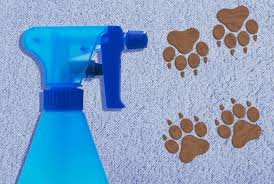 Homemade <b>Carpet Cleaning</b> Solutions That Really Work | Real Simple
