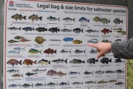 Fish Size Chart Man Pointing Out The Legal Bag And Size Limits For Fishing Stock