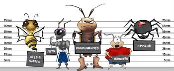 The Bug Busters LLC - Pest Control for Orange County NY, Monroe, Chester,  Goshen