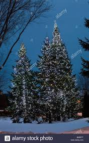Outside Trees With Lights Christmas Trees With Lit Up Fairy Lights Outside Stock Photo