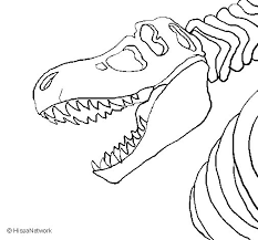 Small Picture Tyrannosaurus Rex skeleton coloring page Coloringcrewcom