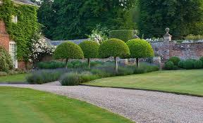 Small Picture contemporary garden designers kent 4 salix alba var sericea with