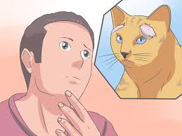 How to Recognize and Treat Ringworm in Cats: 12 Steps