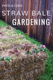 pros and cons of straw bale gardening