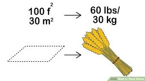 Wheat Growth Stages Chart How To Plant Wheat 13 Steps With Pictures Wikihow