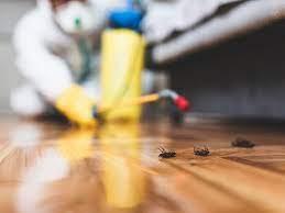 Pest Control Companies – Ensuring A Healthy Environment
