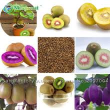 Compare Prices On Trees Germany Online ShoppingBuy Low Price Non Gmo Fruit Trees For Sale