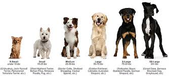 dog breed size chart which dog breed is right for you free online dog and service dog