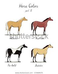 Foal Color Chart Set Horse Color Chart On White Stock Vector Royalty Free