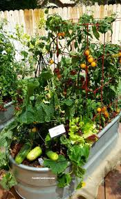 Kitchen Garden In Pots Grow A Container Vegetable Garden On Your Patio Tips The Foodie