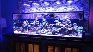 Fish Tank Saltwater Fish Tank Reef Aquarium Myreefliving Ben 200 Gallon