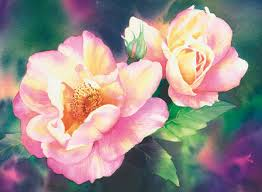 janet whittle s watercolour flowers hledat googlem