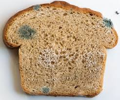 Foods Decoded Solving A Moldy Bread