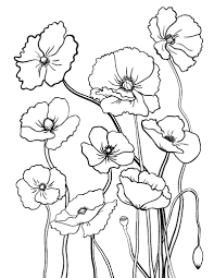 Small Picture Printable poppy coloring page Free PDF download at http