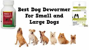 Best Dog Dewormer For Small And Large Dogs Top 5 Picks