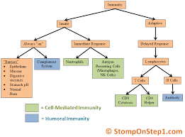 Humoral Immunity Flow Chart 30 T Cell Activation Flow Chart