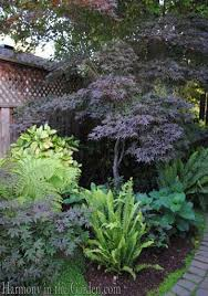 Small Picture Best 25 Shade shrubs ideas on Pinterest Shrubs Clematis