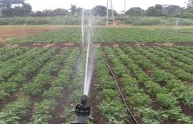 Sprinkle Irrigation System For Water Distribution To Crops