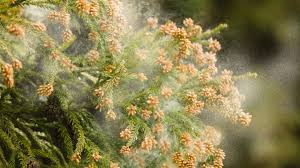 Image result for pollen