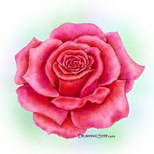Small Picture How to Draw a Rose Step by Step