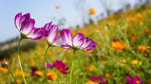 """Résultat de recherche d'images pour """"images de jardins et fleurs"""""""