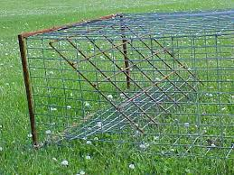 homemade turtle basket trap