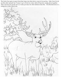 Small Picture 7939 best Coloring pages images on Pinterest Coloring books