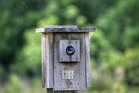 Birdhouse Top 10 Bird House Problems And Solutions