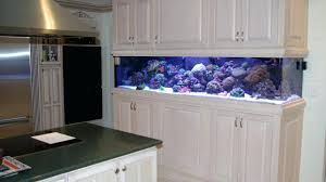 office desk fish tank. Office Fish Tank Amazon Divider 300 Gallon Saltwater Aquarium Cool Tanks Desk K