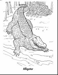 Small Picture Amazing alligator crocodile drawing with alligator coloring pages