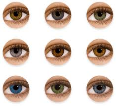 Baby Eye Color Chart Clipart Images Gallery For Free