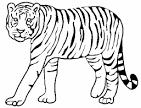 Картинки тигров раскраски