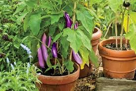Small Picture How to Make Terrace Vegetable Garden Complete Tutorial