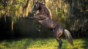 Hd Horse Desktop Wallpaper C4khy8jjpg Picseriocom