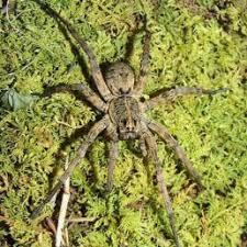 Spiders In Tennessee Species Pictures