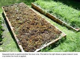 garden cover crop. Mulch Garden Bed Seaweed Is Used To Smother The Cover Crop On