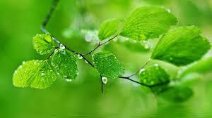 green natureal desktop wallpapers