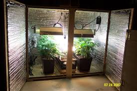 Small Picture Growing weed is actually pretty easy and anyone with a few extra