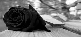 Αποτέλεσμα εικόνας για μαύρο τριαντάφυλλο