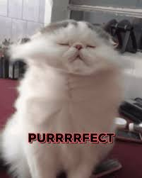 New trendy GIF/ Giphy. perfect purrfect perfect cat. Let like/ repin/