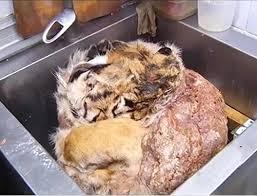 Zou jij een bedreigde diersoort willen eten om hem juist te redden?