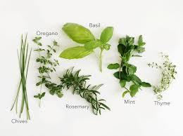 growing herbs indoors with kids super