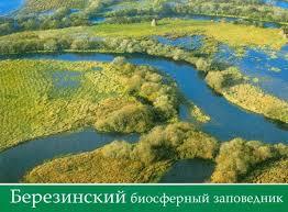 Национальные парки и заповедники Беларуси информация о природных  Березинский биосферный заповедник Березинский биосферный заповедник