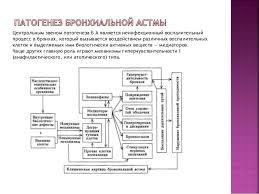 Презентация на тему Бронхиальная астма  Плесень пыльца 6
