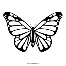 Printable Butterfly Outline Pin By Amy Orwen On Tattood Butterfly Drawing Butterfly