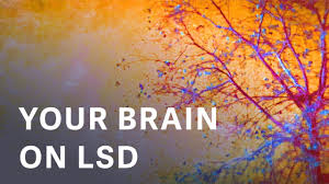 Image result for LSD